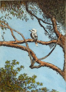 Kookaburra_on_Branch